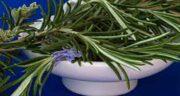 عکس اکلیل کوهی ؛ عکس گیاه اکلیل کوهی یا گیاه رزماری چگونه است
