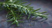 فواید اکلیل کوهی ؛ خواص اکلیل کوهی از نظر طب سنتی چیست