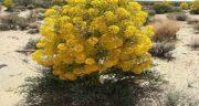 فواید گیاه آنغوزه ؛ خاصیت درمانی گیاه انغوزه برای انواع بیماری ها