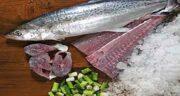 فواید گوشت ماهی در تغذیه انسان ؛ ماهی سرشار از کدام ویتامین است