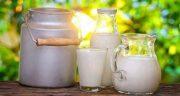 فواید شیر آغوز گاو ؛ ایا اغوز و شیر گاو برای کودکان و بزرگسالان مفیده