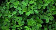 فواید یونجه برای درختان ؛ خاصیت یونجه خشک برای درختان و گل ها