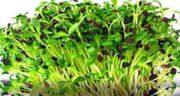فواید یونجه در طب سنتی ؛ خواص گیاه یونجه از نظر طب سنتی چیست
