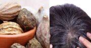 هلیله سیاه برای رشد مو ؛ روش مصرف هلیله سیاه برای سفیدی مو