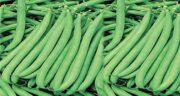 خواص لوبیا سبز برای دیابت ؛ فواید مصرف لوبیا سبز برای قند خون بالا
