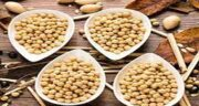 خواص لوبیا سویا برای کودکان ؛ فواید لوبیا سویا پخته برای کودکان
