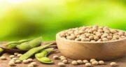 لوبیا سویا در شیردهی ؛ خوردن لوبیا سویا برای افزایش شیر مادران