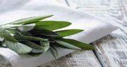 مضرات چای مریم گلی ؛ ایا خوردن چای مریم گلی برای کلیه مضره