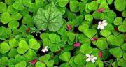 مضرات یونجه برای باغ ؛ عوارض کاشت یونجه در زمین های کشاورزی
