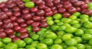 آلوچه سبز و قرمز ؛ آشنایی با خواص و مضرات آلوچه سبز و قرمز برای سلامتی