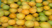 آلو زرد برای دیابتی ها ؛ خواص و مضرات خوردن آلو زرد برای افراد دیابتی