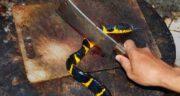 خواص گوشت مار برای اسپرم ؛ تقویت و افزایش تعداد اسپرم با خوردن گوشت مار