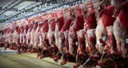 خواص گوشت گراز وحشی ؛ بررسی خاصیت درمانی خوردن گوشت گراز وحشی