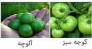 فرق آلوچه و گوجه سبز ؛ چه تفاوت هایی بین آلوچه و گوجه سبز وجود دارد