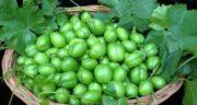 فواید آلوچه سبز ؛ آشنایی با خواص و فواید خوردن آلوچه سبز برای سلامتی