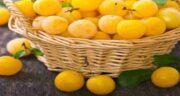 فواید آلو زرد ؛ آشنایی با خواص و فواید درمانی مصرف آلو زرد