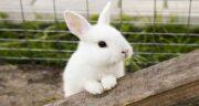 عکس گوشت خرگوش ؛ تصویر گوشت خرگوش تازه در فروشگاه اینترنتی