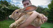 فواید گوشت خرگوش صحرایی ؛ خوردن گوشت خرگوش صحرایی برای ریه