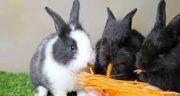فواید گوشت خرگوش وحشی ؛ ایا گوشت خرگوش وحشی برای بدن مفیده