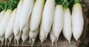 فواید ترب ؛ خاصیت مصرف اب ترب سفید برای درمان سنگ کلیه