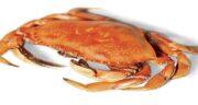 گوشت خرچنگ و سرطان ؛ درمان قطعی سرطان با مصرف گوشت خرچنگ
