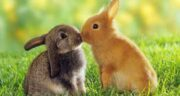 گوشت خرگوش در اهل سنت ؛ خوردن گوشت خرگوش از دیدگاه اهل سنت