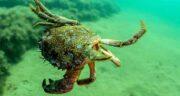 خرچنگ حلال است یا حرام خامنه ای ؛ حکم گوشت خرچنگ از خامنه ایی