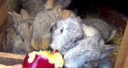 خرگوش و ناباروری ؛ ایا گوشت خرگوش به درمان ناباروری کمک میکند