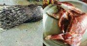 خواص گوشت جوجه تیغی بزرگ ؛ خاصیت گوشت جوجه تیغی بزرگ چیست