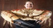 خواص گوشت خرچنگ چیست ؛ خاصیت گوشت خرچنگ برای بدن چیست
