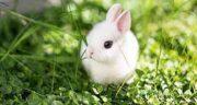 خواص گوشت خرگوش بیابانی ؛ خاصیت گوشت خرگوش صحرایی