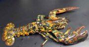 خواص خرچنگ برای اسپرم ؛ تقویت اسپرم اقایان با خوردن گوشت خرچنگ