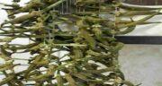 طبع بامیه چیست ؛ طبع بامیه خورشت برای بدن سرد است یا گرم