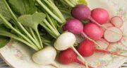 ترب برای سرماخوردگی ؛ بهبود سرماخوردگی با خوردن روزانه ترب