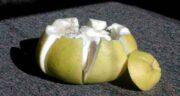 دارابی و گریپ فروت ؛ مقایسه خواص و ارزش غذایی دارابی و گریپ فروت