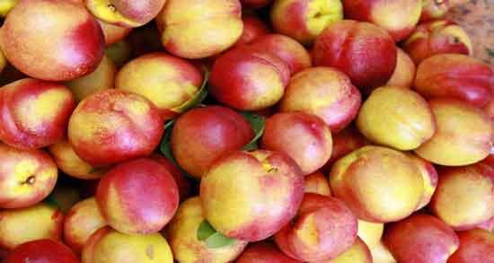 شفتالو چه میوه ای است ؛ آشنایی کامل با میوه شفتالو