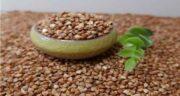 گندم سیاه را از کجا تهیه کنیم ؛ روش تهیه و مصرف گندم سیاه