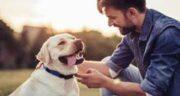 تعبیر خواب سگ سفید از حضرت یوسف ؛ تعبیر خواب سگ ابن سیرین و امام صادق