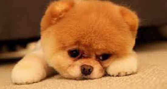 تعبیر سگ در خواب حضرت یوسف ؛ سگ زرد و سیاه و سفید از حضرت یوسف
