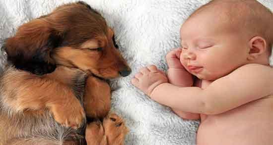 دیدن سگ در خواب تعبیر حضرت یوسف ؛ تعبیر خواب سگ زرد حضرت یوسف